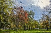 Bright, Colorful Autumn Blurred Landscape In City Park With Wet Foliage After Rain Through  Wet Wind poster