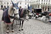 foto of pavestone  - Spotted black and white horses and carriage on square are waiting for passengers - JPG