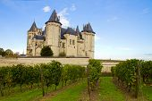 Saumur castle and vineyards