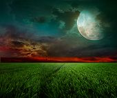 image of moonlight  - young wheat field at night with the moonlight - JPG