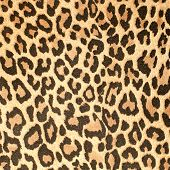 Leopard Leather Pattern Texture Closeup