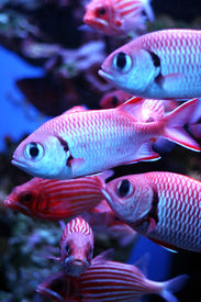 stock photo of school fish  - tropical fish   - JPG