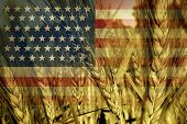 stock photo of trade  - American agriculture concept and farming in the USA with the flag of America on a growing wheat grain field ready for harvest as a symbol of food production and commodity trading from industrial and family farms - JPG