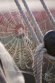 Постер, плакат: Утренняя роса на Spiderweb парусник деталь
