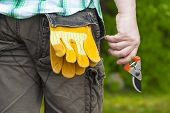 stock photo of prunes  - Man with gardening shears in hand in summer