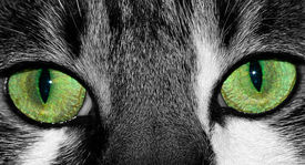 stock photo of extreme close-up  - extreme close up of lucky the cat - JPG