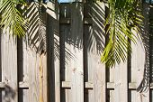Wooden Privacy Fence With Palm Trees Overhanging