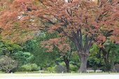 foto of pubic  - Big tree at pubic park in autumn season - JPG