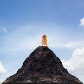 picture of baby chick  - young kid chick baby standing on top peak of mountain abstract for success goal target leaderleader shipadventureriskdangerdangerous - JPG