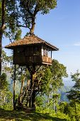 stock photo of thong  - House on tree at Thong Pha Phum National Park Kanchanaburi Thailand - JPG
