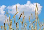 stock photo of steppes  - Steppe plants against the blue sky and clouds - JPG