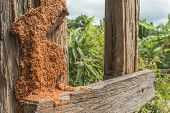 stock photo of termite  - orange Termite nest on brown fence background - JPG