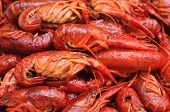 picture of craw  - closeup boiled craw fish for background uses - JPG