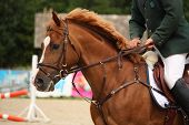 pic of bridle  - Brown horse portrait with bridle during horse show - JPG