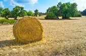 picture of neo  - The round bale of straw on the meadow Neo Chorio Cyprus - JPG