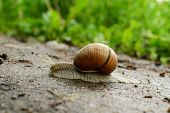 pic of creeping  - Snail that creeps on sand on a background a green grass - JPG