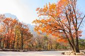 pic of seoraksan  - colorful trees at Seoraksan National Park in antumn Korea - JPG