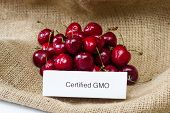 pic of food label  - food labeling concept with bright red cherries and a GMO label  - JPG