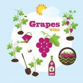 stock photo of grape  - Vector garden illustration in flat style - JPG