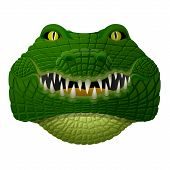 image of alligator  - Front view of isolated alligator head - JPG