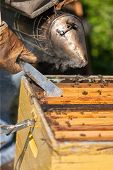 foto of smoker  - farmer with bee smoker checking a hive with bees - JPG