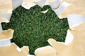 image of cut torn paper  - torn brown color paper on green grass background - JPG