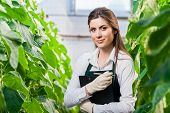pic of greenhouse  - Portrait of a young woman at work in greenhouse - JPG