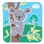 pic of koalas  - Children vector illustration of funny koala bear on eucaliptus tree - JPG