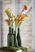 foto of flower arrangement  - beautiful flowers in old fashion green bottles on moss - JPG