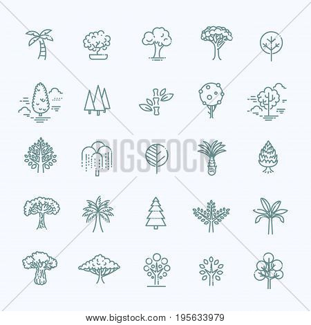 poster of Includes leaf, forest, trees, botany and more