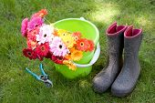 colorful daisies sit in a bucket, secateurs & boots - yardwork poster