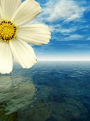 image of beautiful flower  - Beautiful flower with reflection on water  - JPG