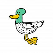 Duck Cartoon Isolated. Drake Drawing. Water Bird poster