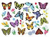 Colored Butterflies. Hand Drawn Simple Collection Of Butterflies And Flowers Isolated On White Backg poster