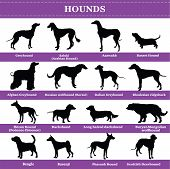 Set Of 20 Hounds Dogs. Vector Set Of Hounds Breeds Dogs Standing In Profile. Isolated Dogs Breed Sil poster