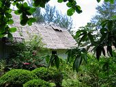 Tropical Thatched Roof poster