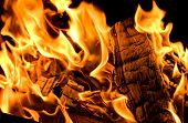 Beautiful Fire Flames. Closeup. Flame Of The Fire. Texture Of Burning Wood And Flame. Selective Focu poster