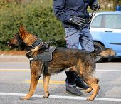 Dog Canine Unit Of The Police Called K-9 To Identify The Explosives During An Anti-terrorist Operati poster