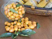 stock photo of tangelo  - kumquat fresh and ripened in the foreground - JPG