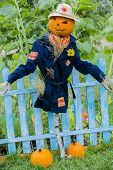 image of scarecrow  - Scarecrow in the garden  - JPG