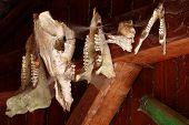 picture of roebuck  - Skulls of animals decoration wall still life - JPG