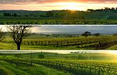 Vineyard Panorama's