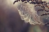stock photo of spider web  - Spider web with colorful background and flower - JPG