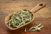 picture of substitutes  - stevia dried leaves in a rustic wooden scoop - JPG