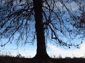 picture of shivering  - reflection of a black silhouette of a tree in blue water - JPG