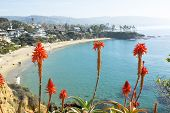 stock photo of beachfront  - Bright orange Aloe Vera cactus blooms framed against a beautiful beachfront cove with turquoise water in Laguna Beach - JPG