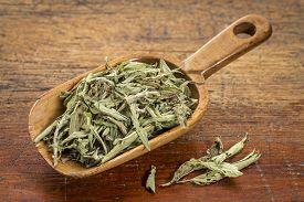 foto of substitutes  - stevia dried leaves in a rustic wooden scoop - JPG