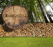 image of lumber  - Dry chopped firewood logs in a pile in a green forest and wooden sign section of tree trunk with text lumber hanging with metal chain - JPG