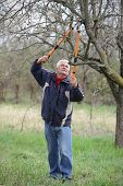 foto of prunes  - Senior man pruning tree in orchard active retirement selective focus on face - JPG