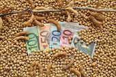 pic of soy bean  - Agricultural concept heap of soy beans and Euro banknotes - JPG